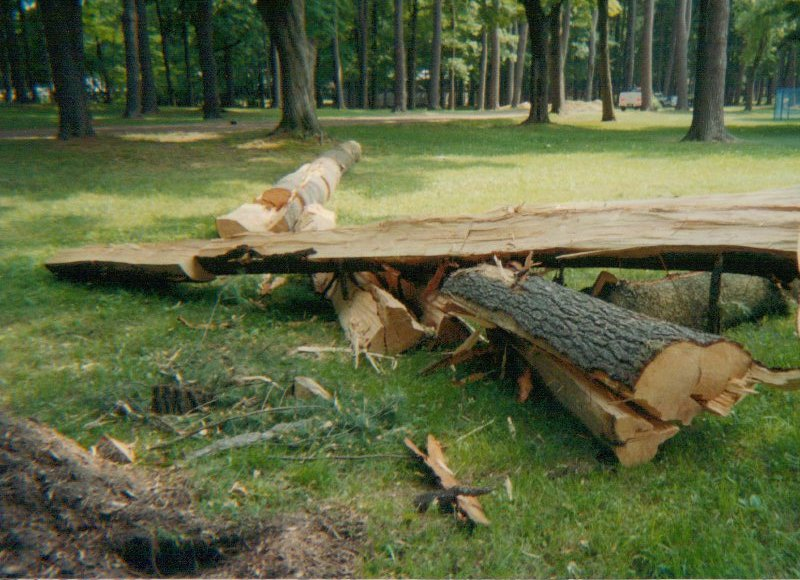 Services And Tree Work In Saratoga Springs Ny