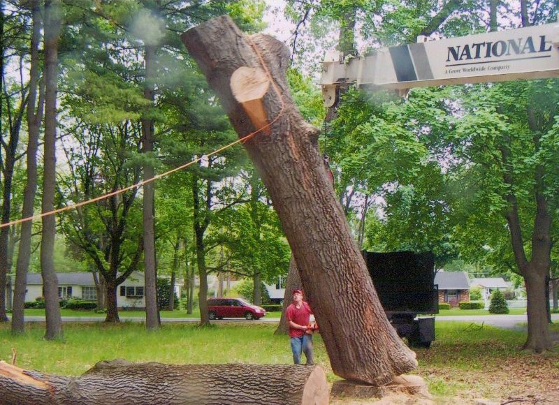 Gallery Of Tom Mullan S Tree Services Amp Stump Removers